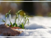Pasākumi ar Latvijas vārdu martā